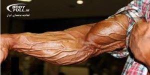 رگها روی عضلات